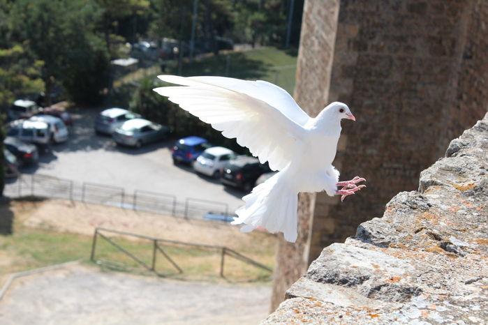 Atrakcje ślubne - Wypuszczanie gołębi na ślubie